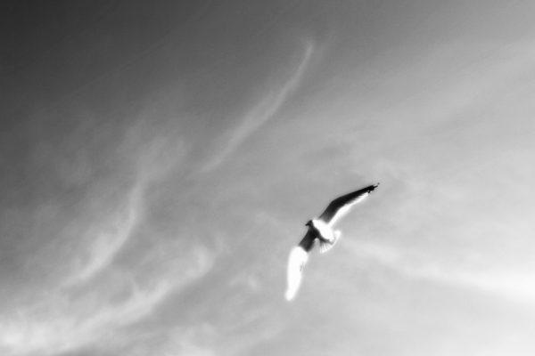 Bird #2 |  Птица #2 Ushkovo, 2020