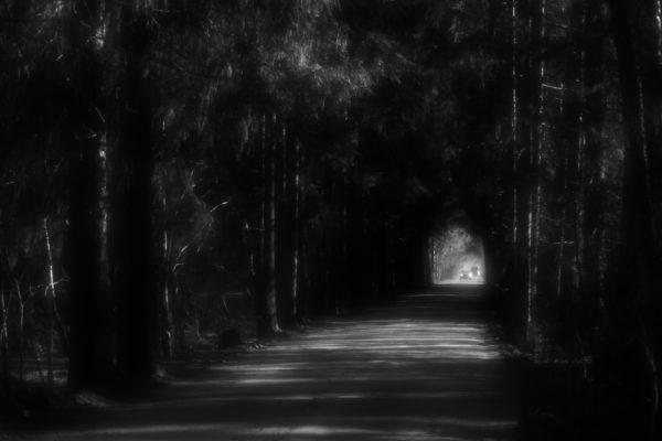 Road in the woods | Дорога в лесу